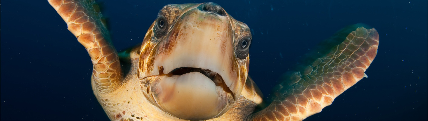 The largest marine conservation project in Europe