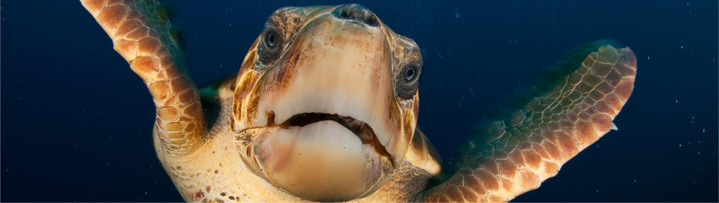 El mayor proyecto de conservación marina de Europa